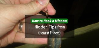 How to Hook a Minnow