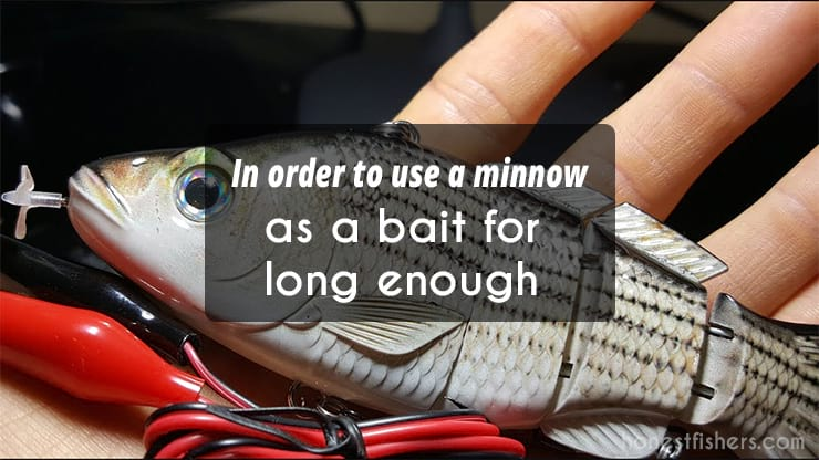 How to Hook a Minnow - Bait-Lure info