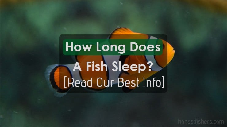 How Long Does A Fish Sleep? Details Info